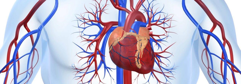 Порок сердца: что это такое, сколько живут с пороком сердца